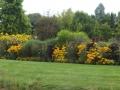 panorama-park-der-gaerten-beet-in-gelb-und-lila
