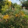 Offener Garten von Frau Dreyer in Ihlow